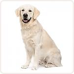 L вес собаки до 50-60 кг