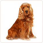 M вес собаки до 20-25 кг