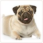 S вес собаки до 12-15 кг