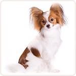 XS вес собаки до 8 кг